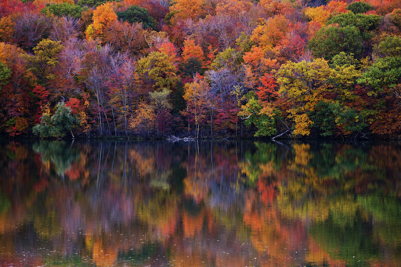 Fall Back to Nature's Dazzling Colors