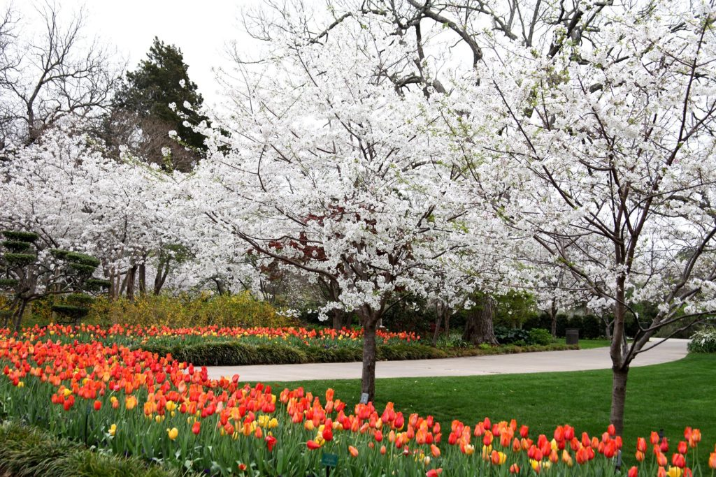 Fun Texas Spring Events and Activities